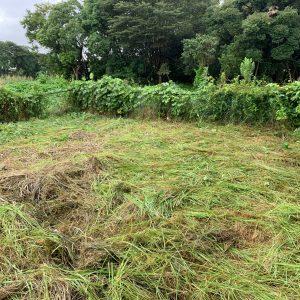 アパート敷地の草刈り